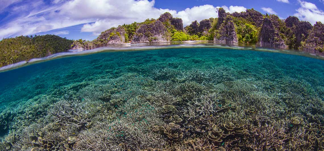 coral reef with raja ampat islands above