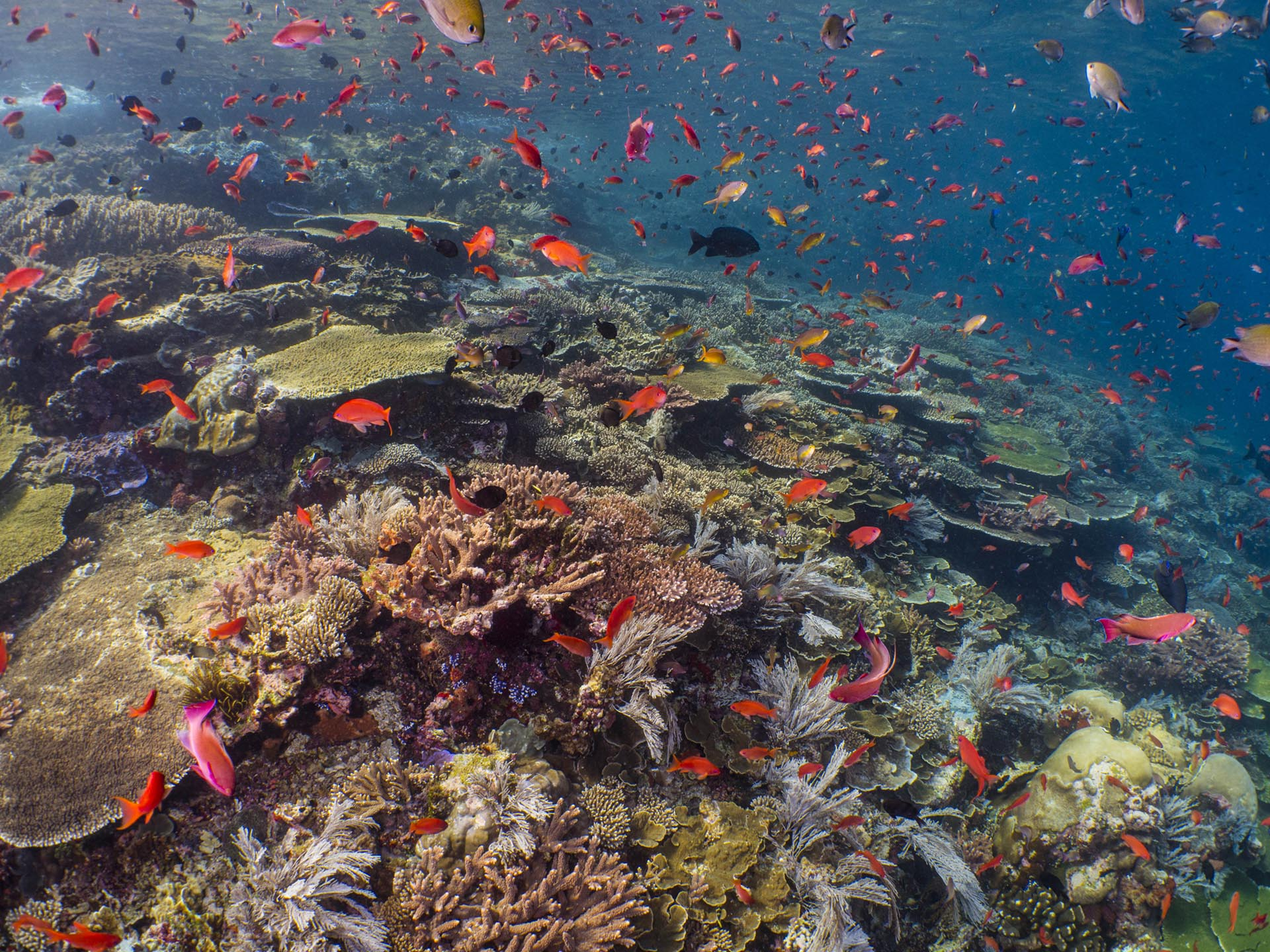colorful reef and reef fish