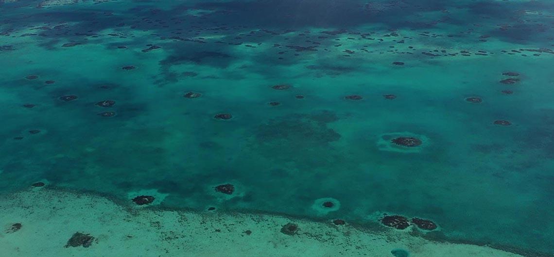 reefscape in belize