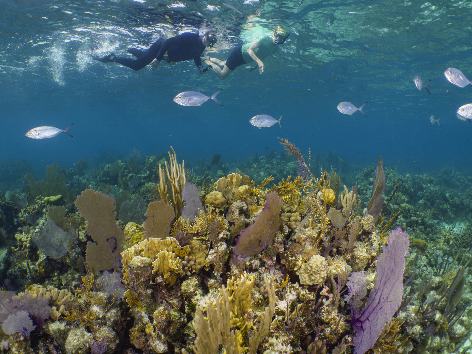 two snorkelers swiming over coral reef with silver fish swimming underneath