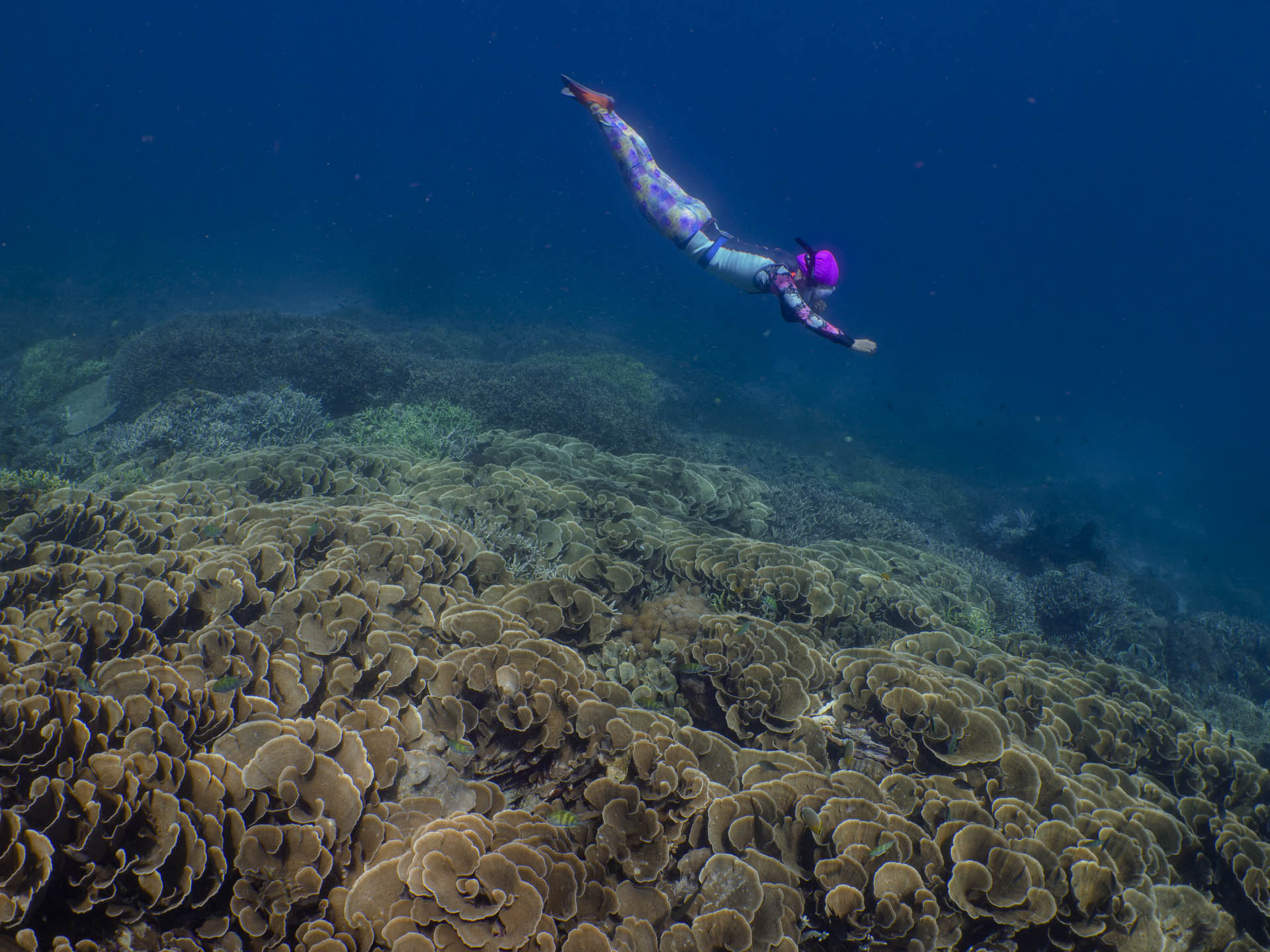snorkeler equalizing while diving to coral reef
