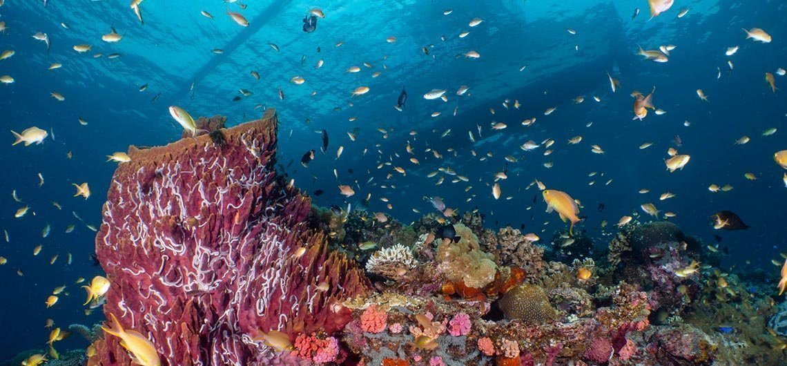 tropical fish on coral reef with boat above