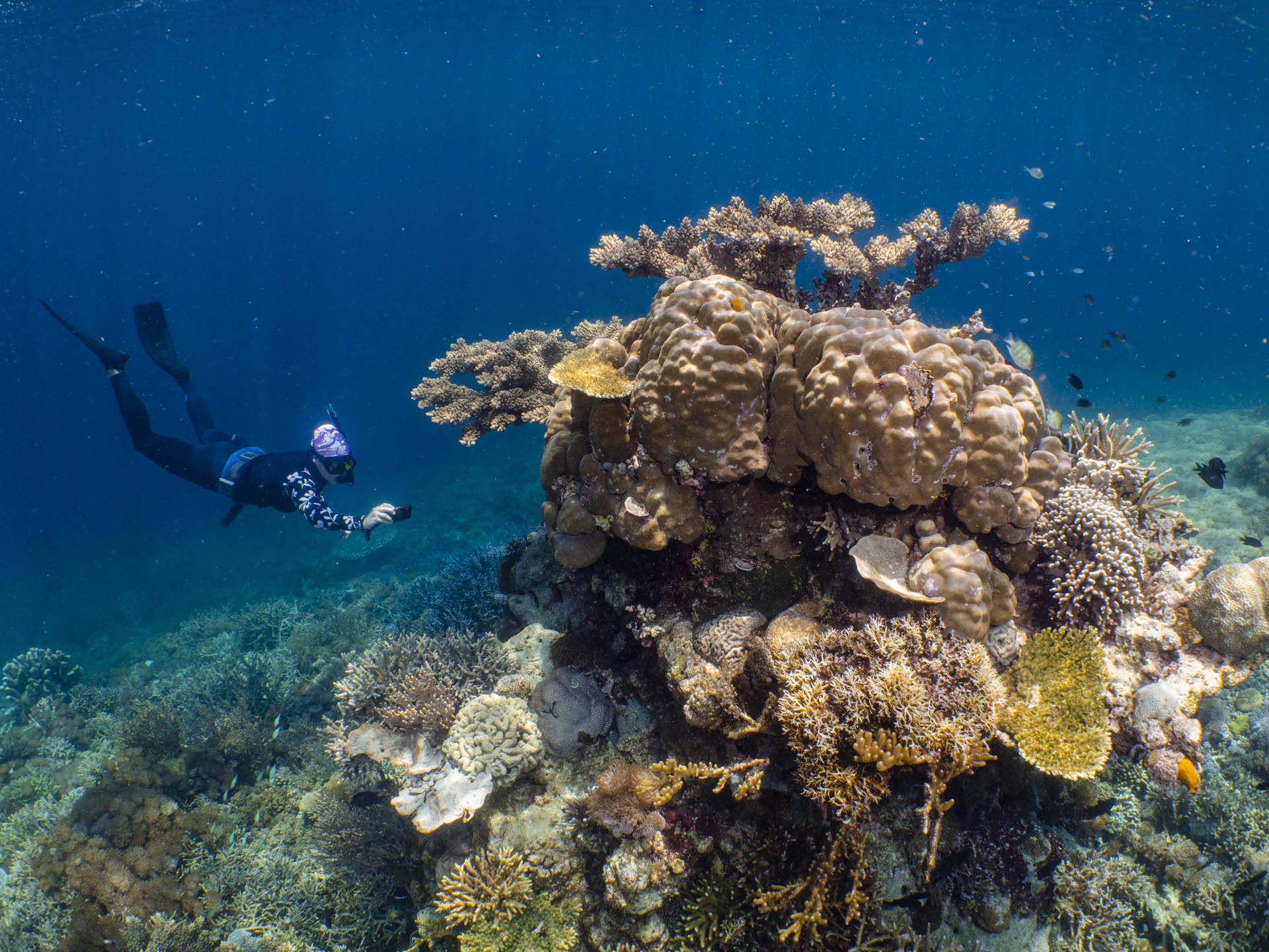 snorkeler diving down to photograph coral reef