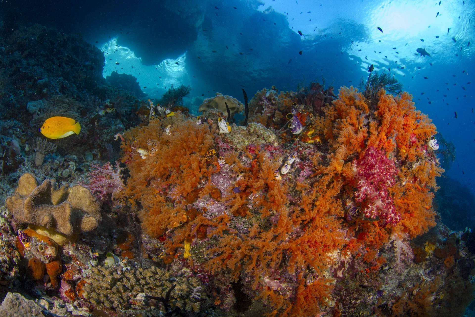orange soft coral and underwater topography