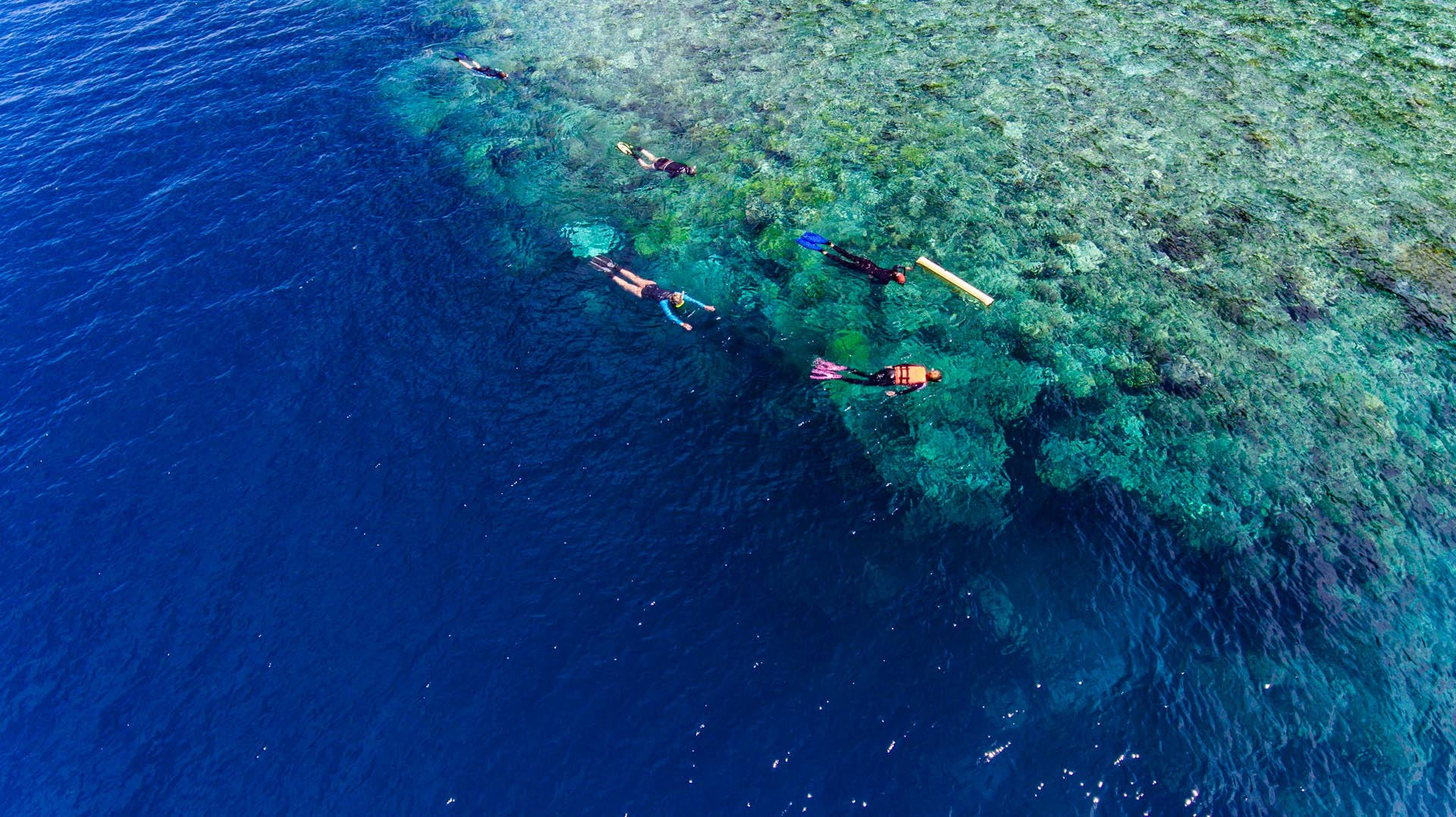 snorkelers floating above coral reef wall