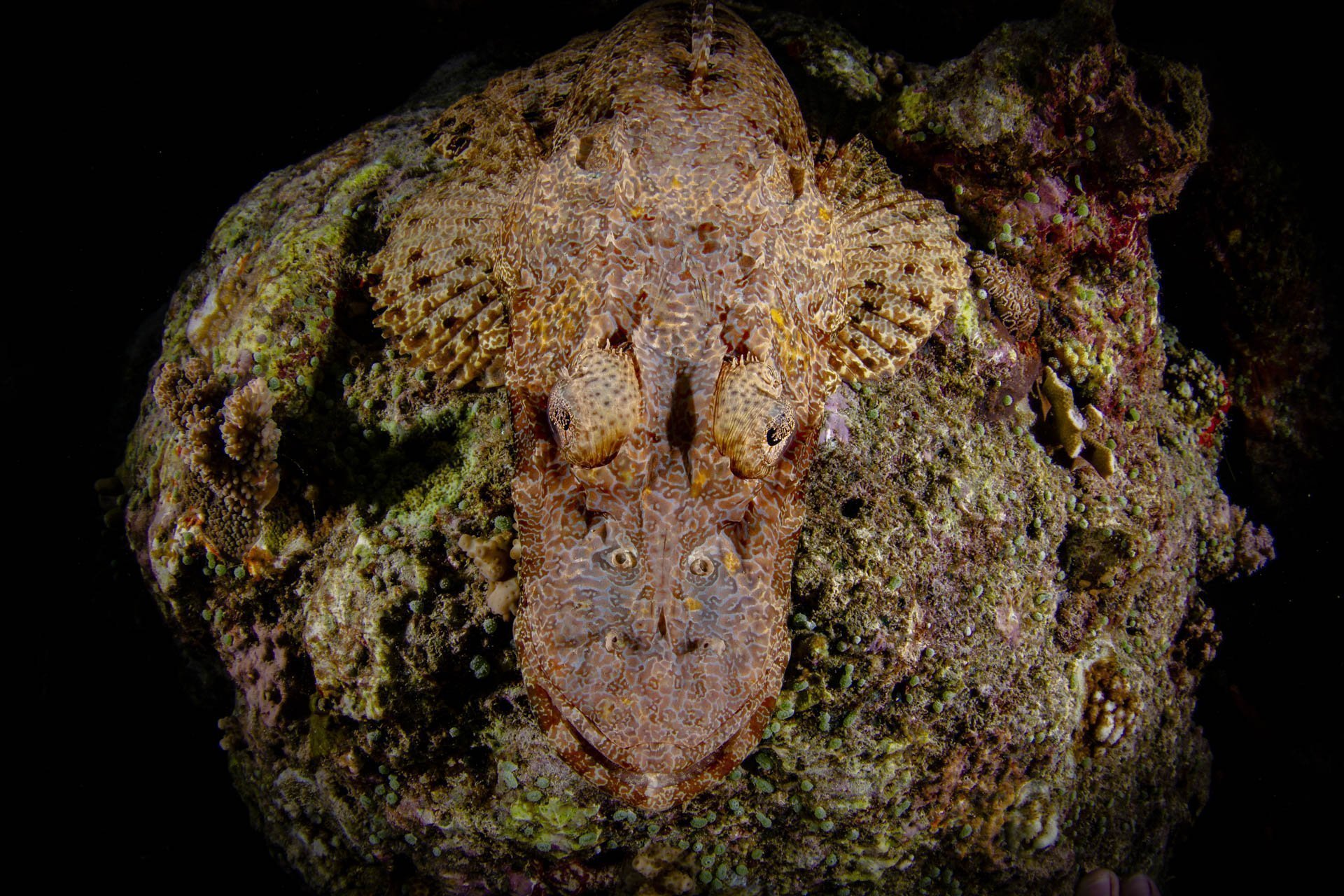 close up of crocodile fish