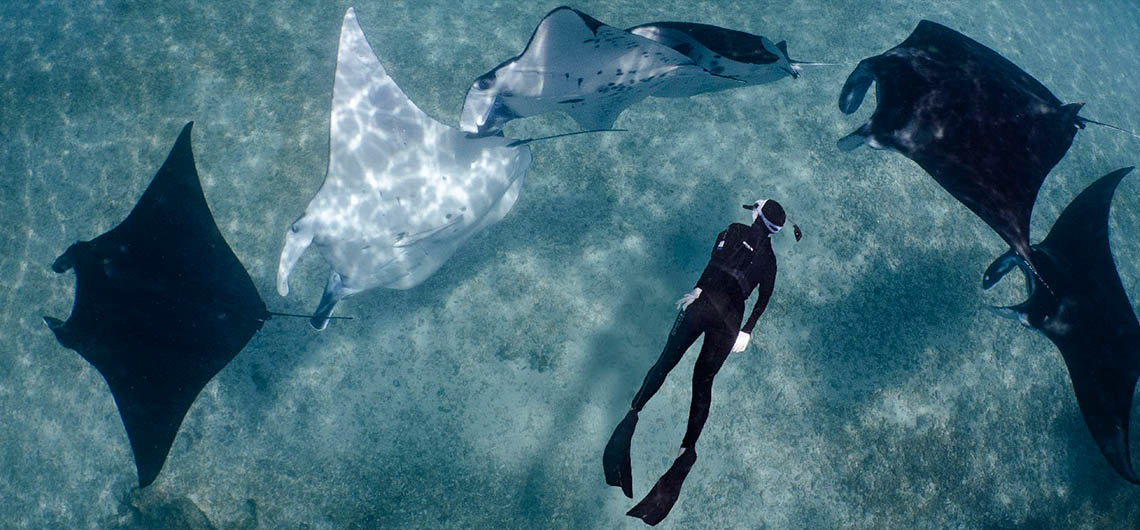Snorkeler surrounded by manta rays