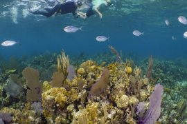 snorkelers above Caribbean coral reef