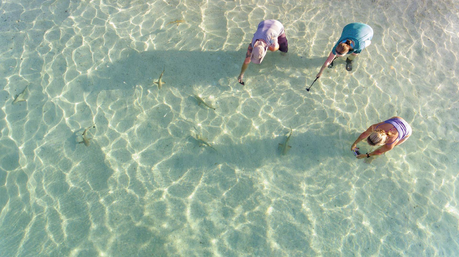 Guests taking photos of baby sharks in shallow water