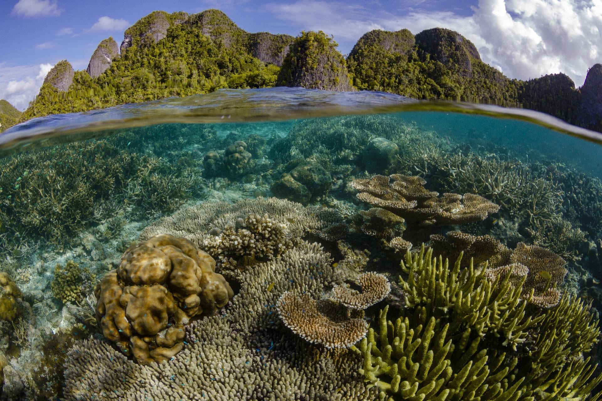 Split shot of coral reef below and raja ampat islands above