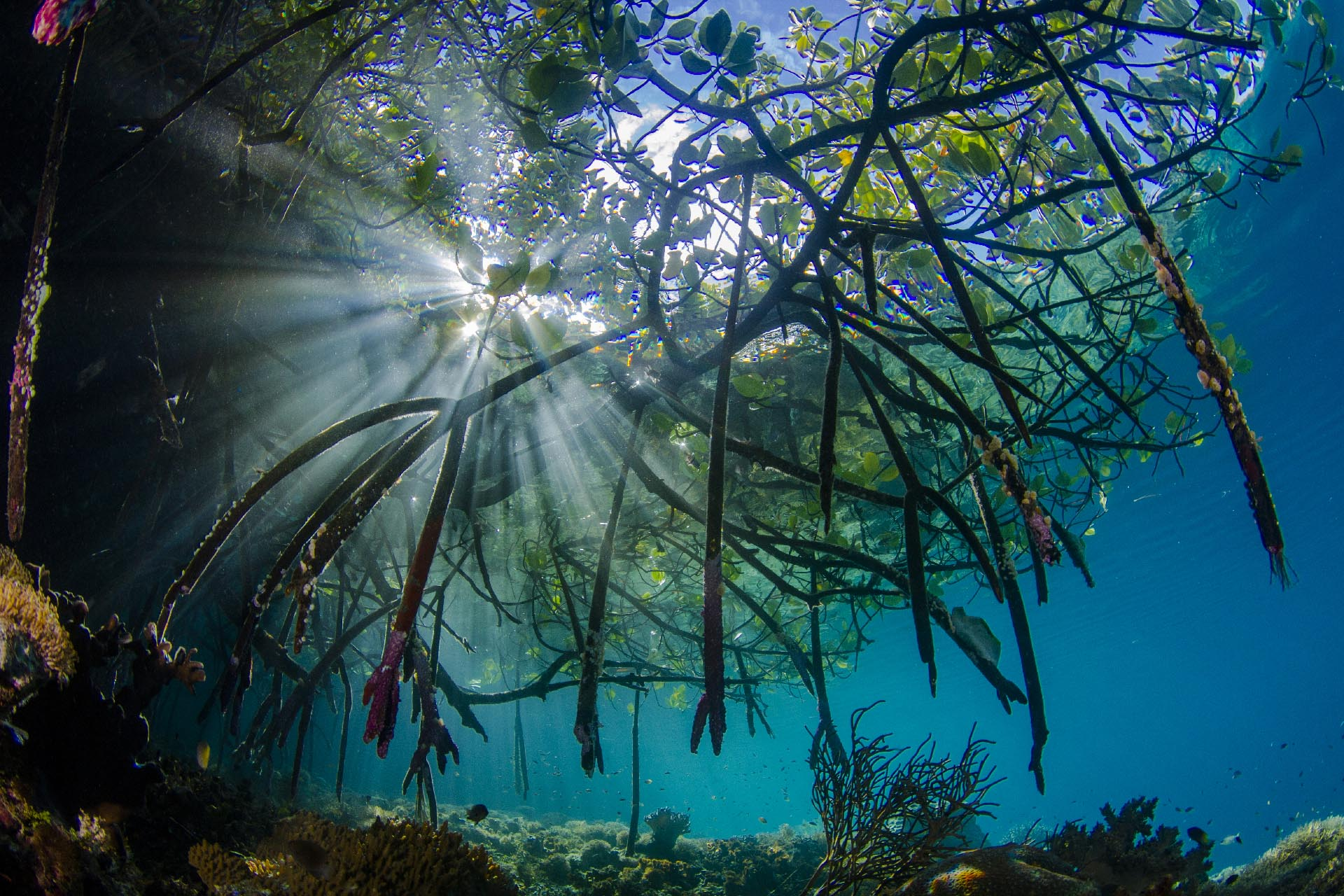 Sun burst of coral reef and mangroves