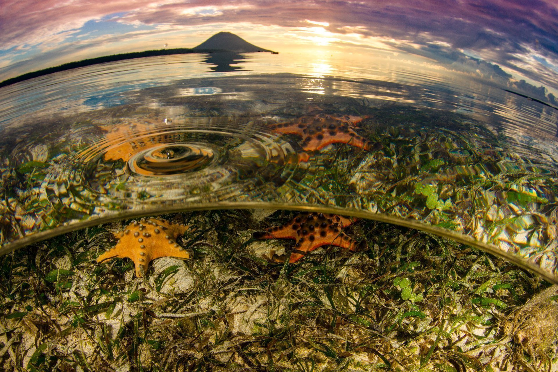 Split shot of sea stars in sea grass and a sunset