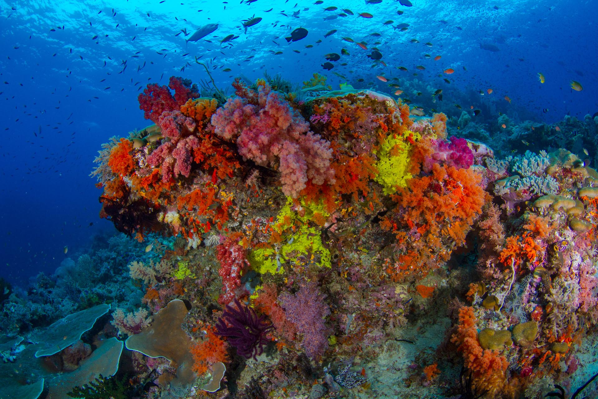 colorful soft coral colony