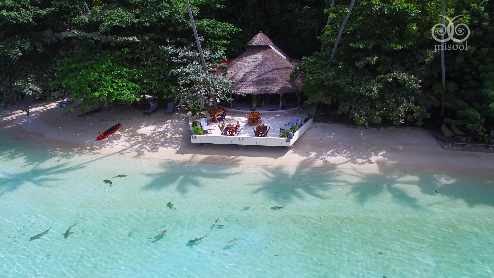 Misool resort bungalow with baby sharks in the shallow water
