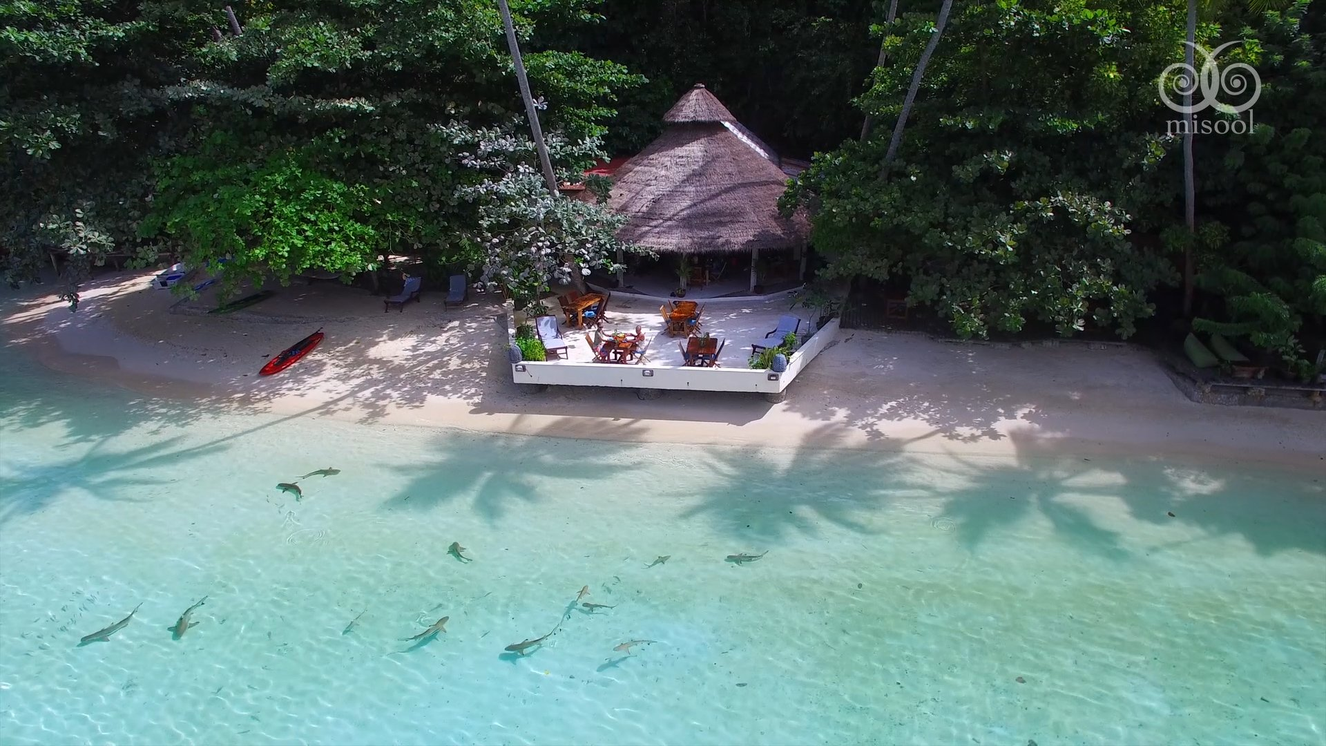 aerial view of misool resort balcony and baby sharks