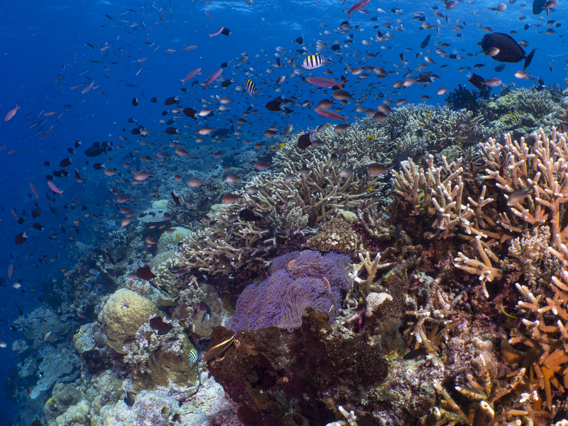hard coral reef scene with lots of fish