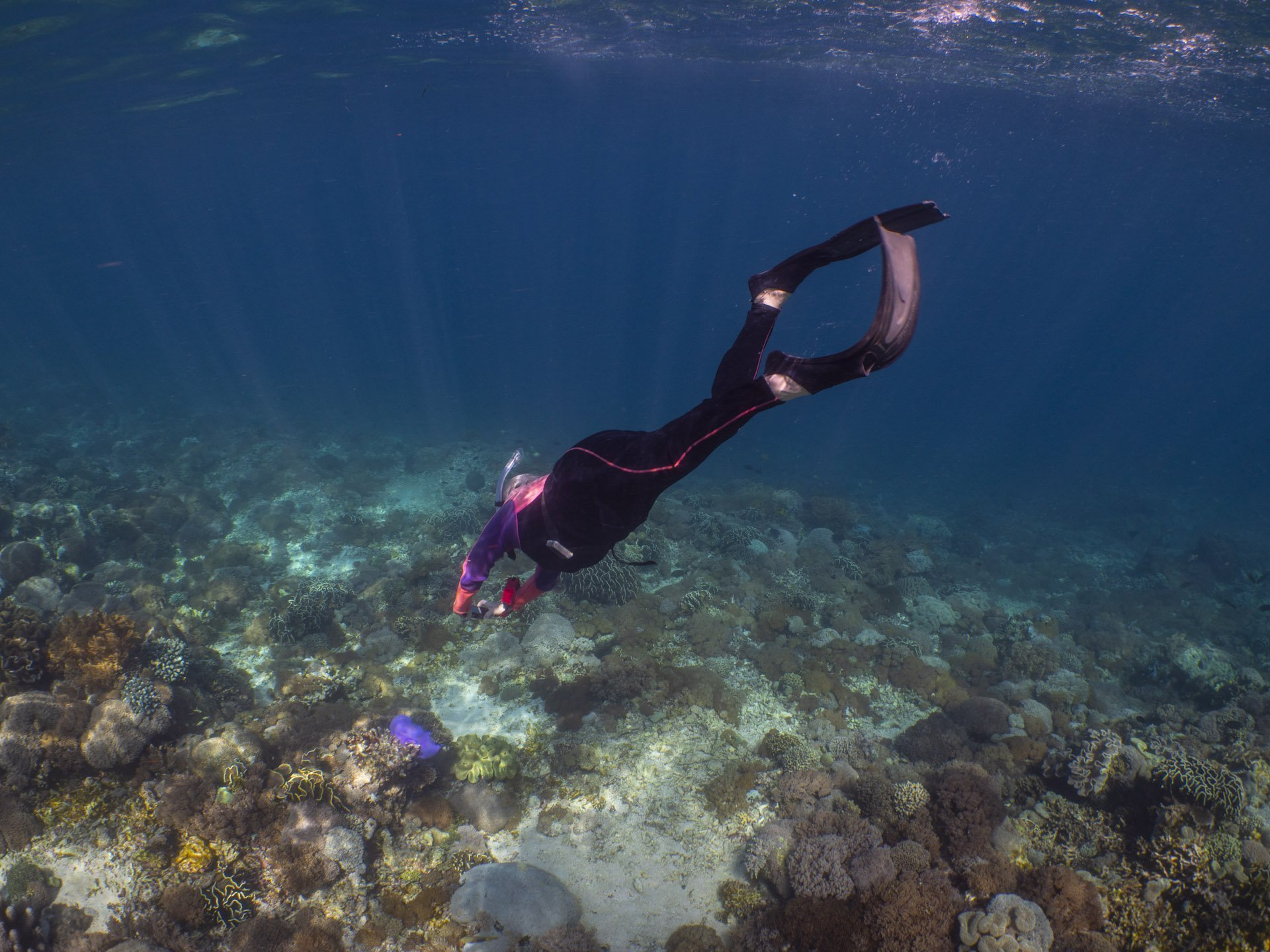 Snorkeler taking photos of coral reef in Alor