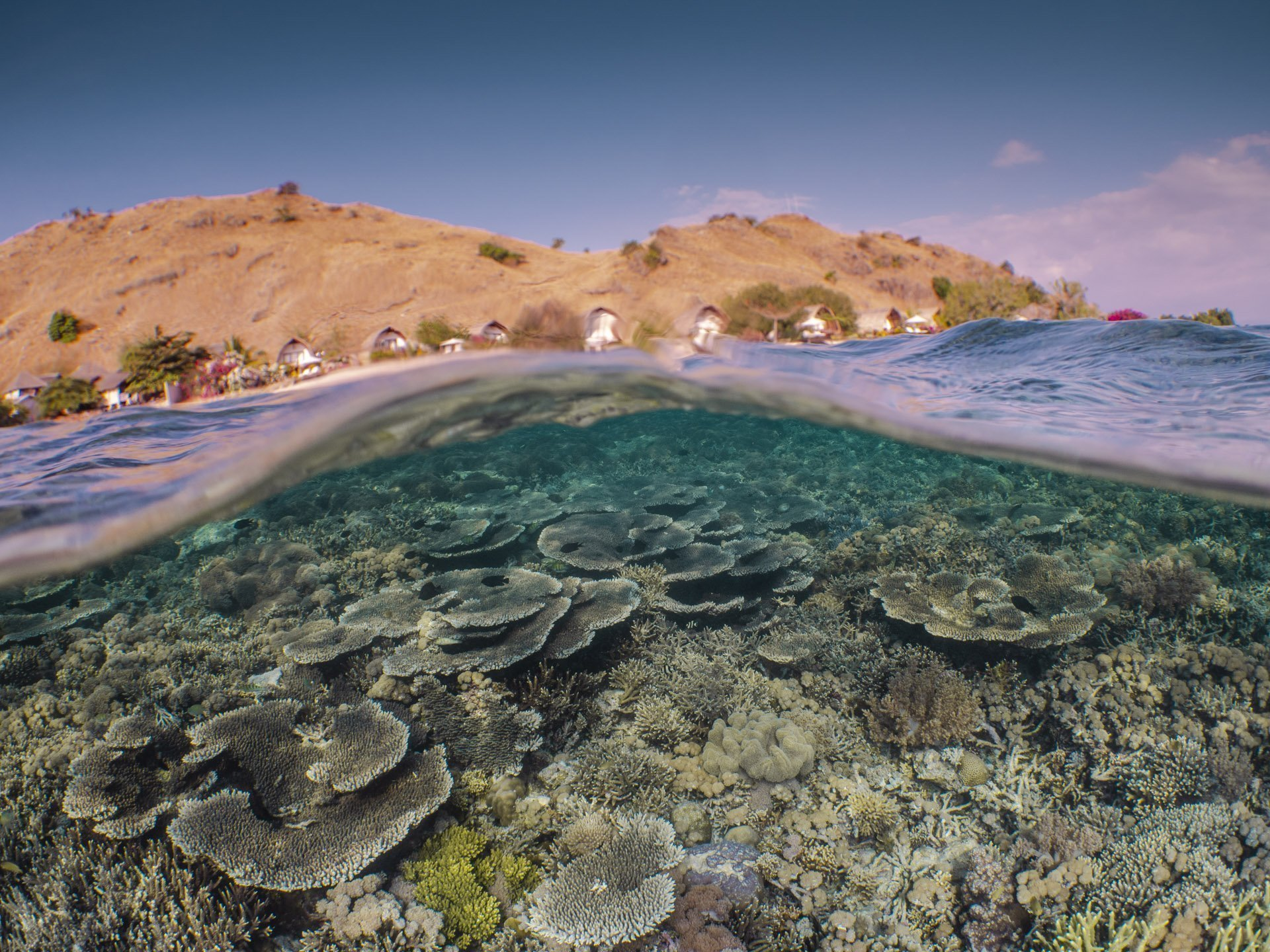 Split shot of Komodo resort and its house reef