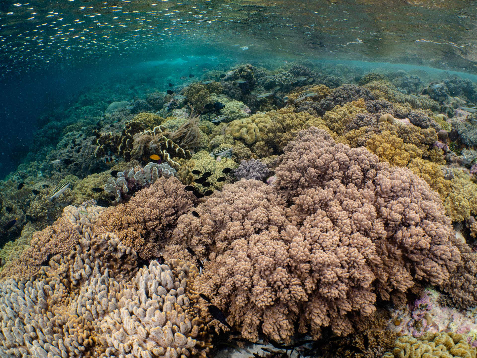 Pristine shallow coral reef
