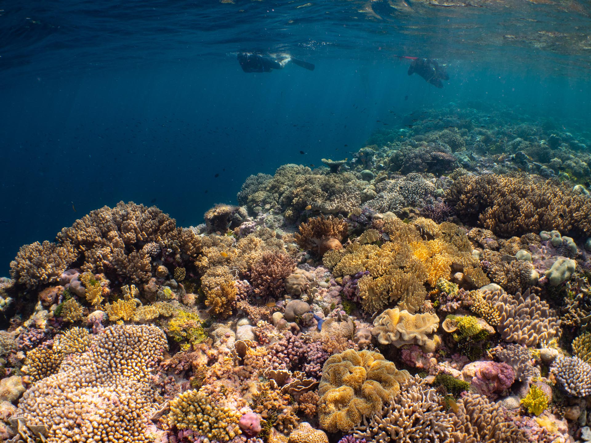 Vast coral reef with snorkelers above