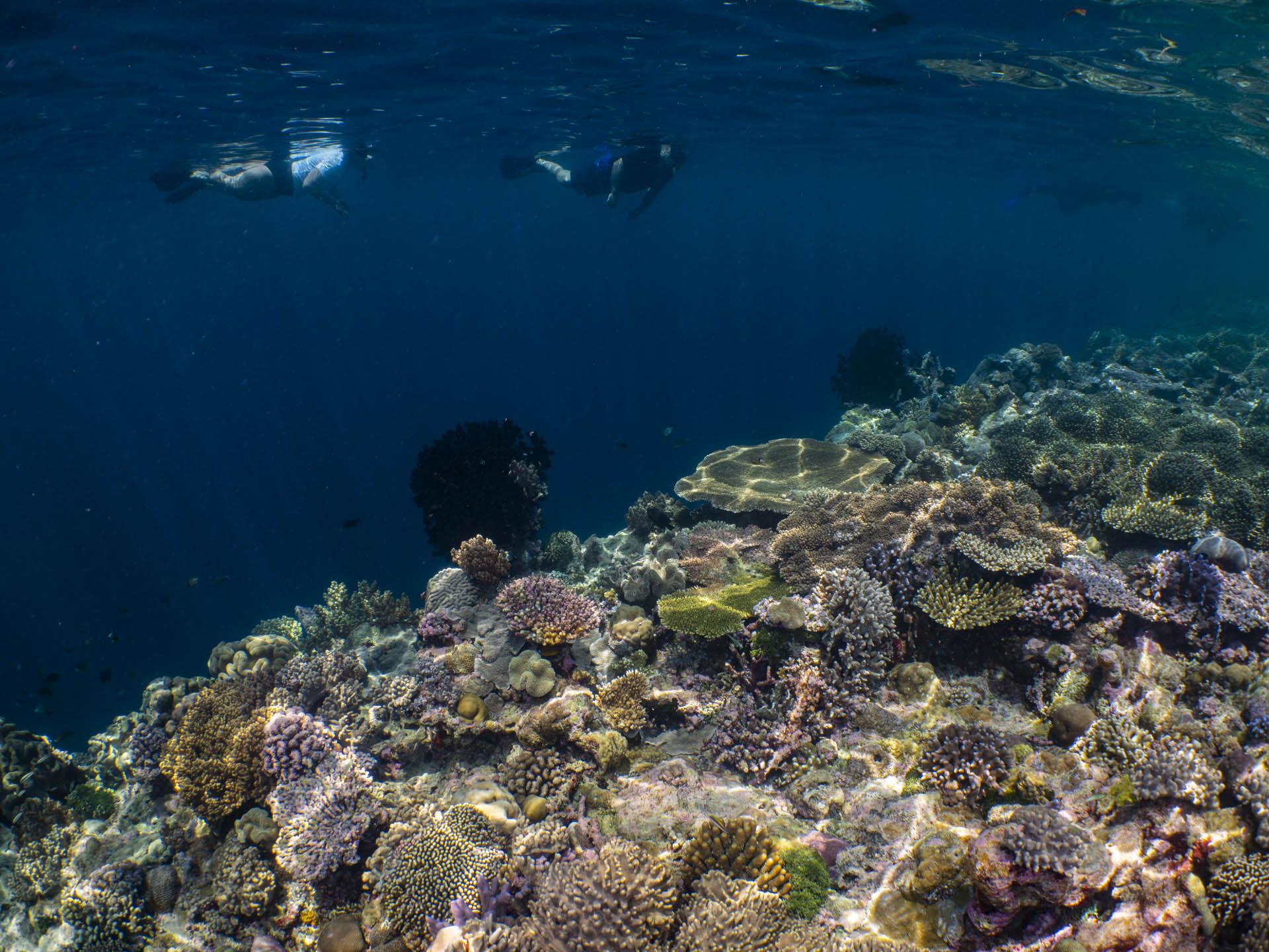 Snorkelers above reef in Wakatobi