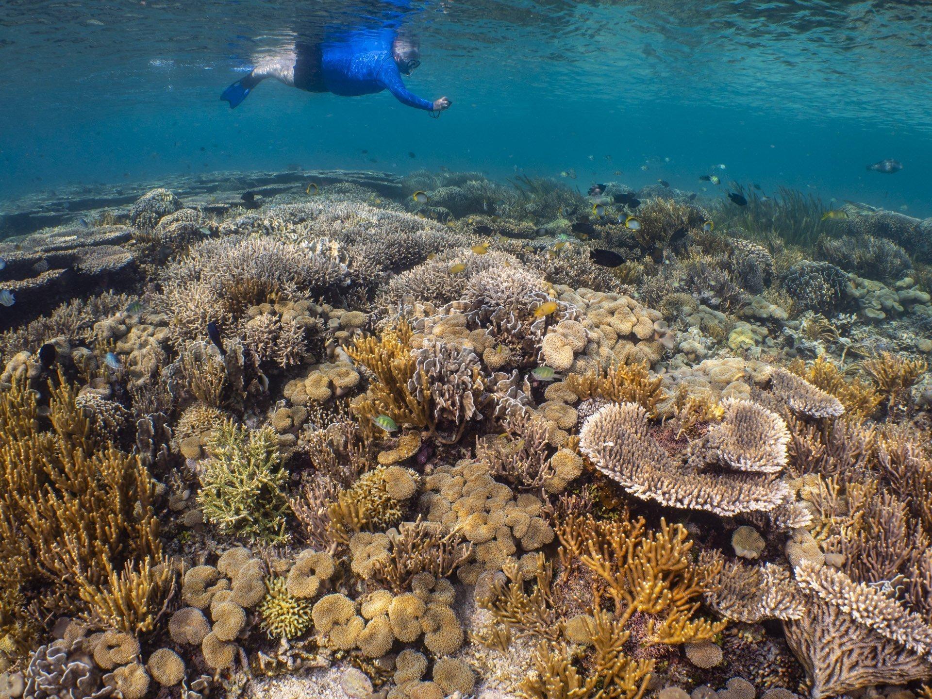 Snorkeler photographing pristine reef in Komodo