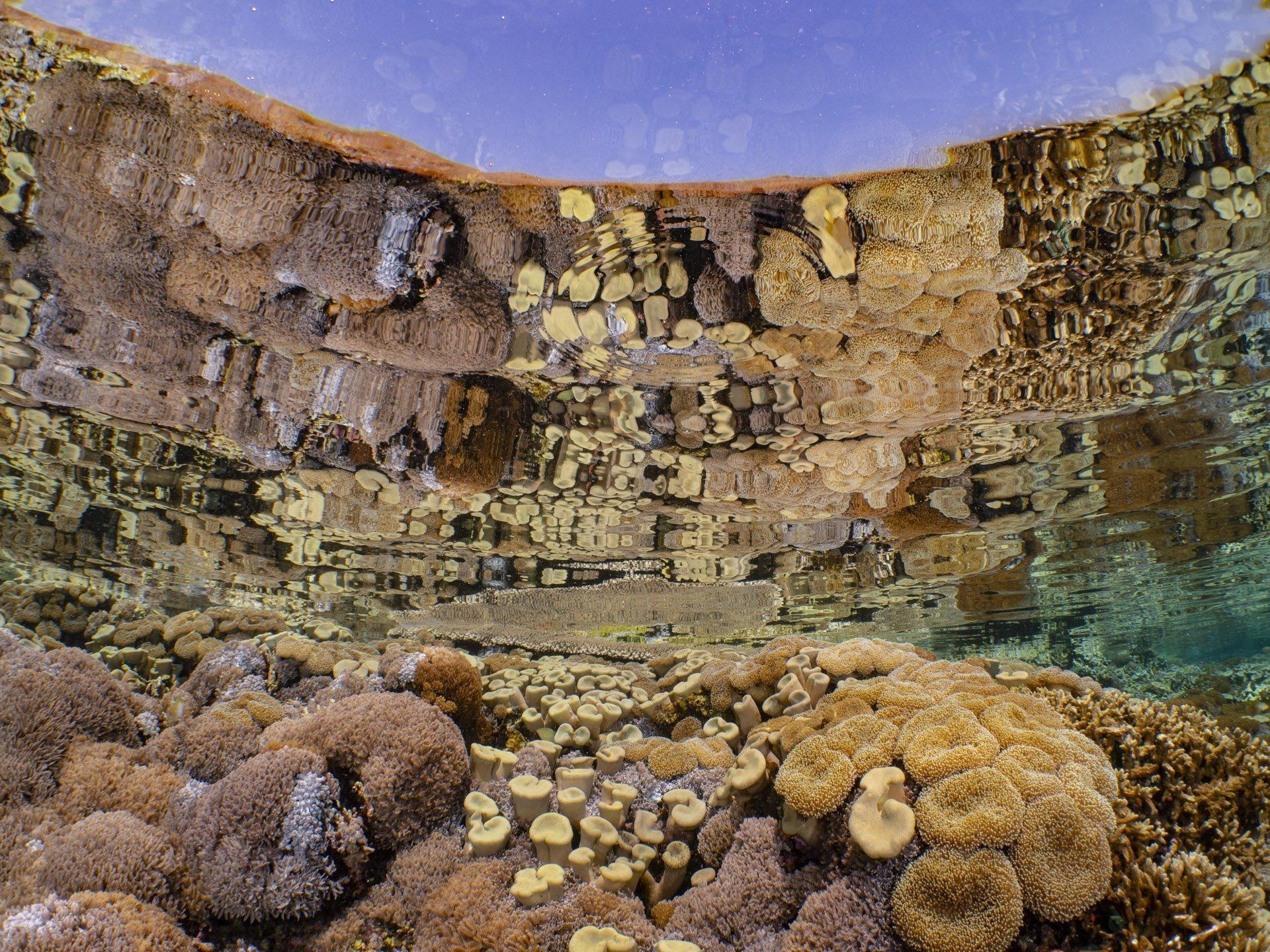 Reef reflection in Komodo National Park