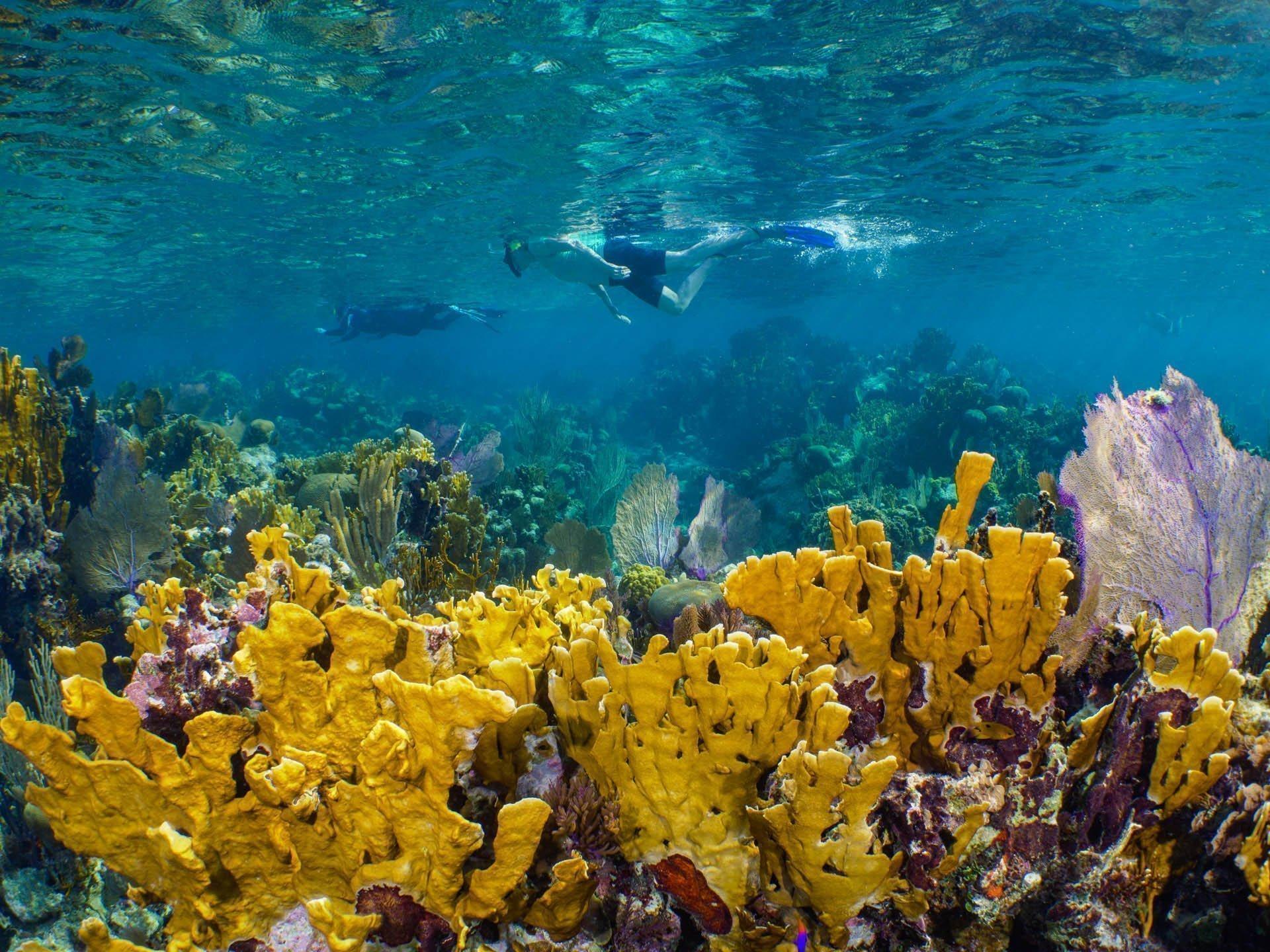 Snorkelers cruising over coral reef