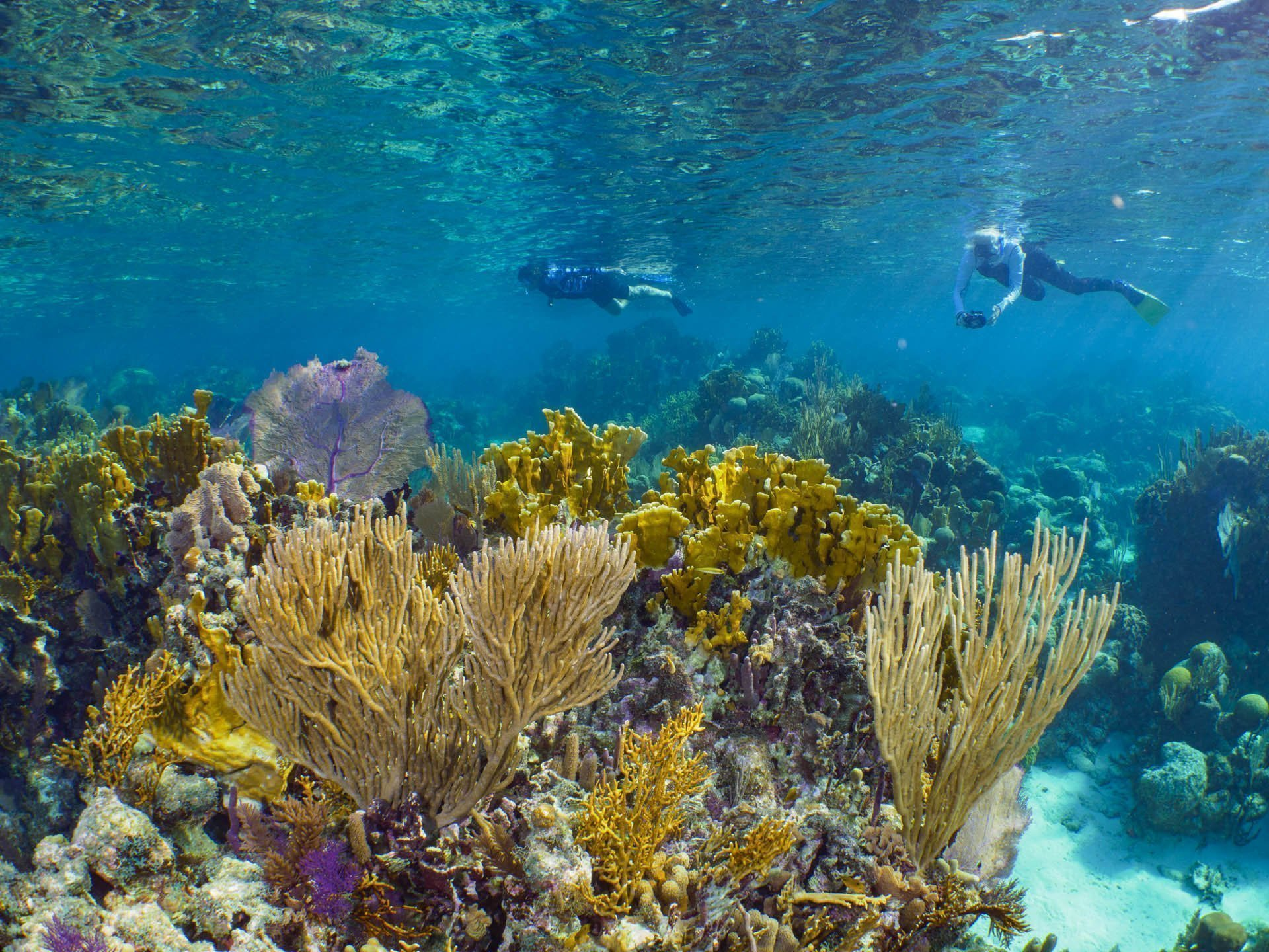 Snorkelers photographing coral reef
