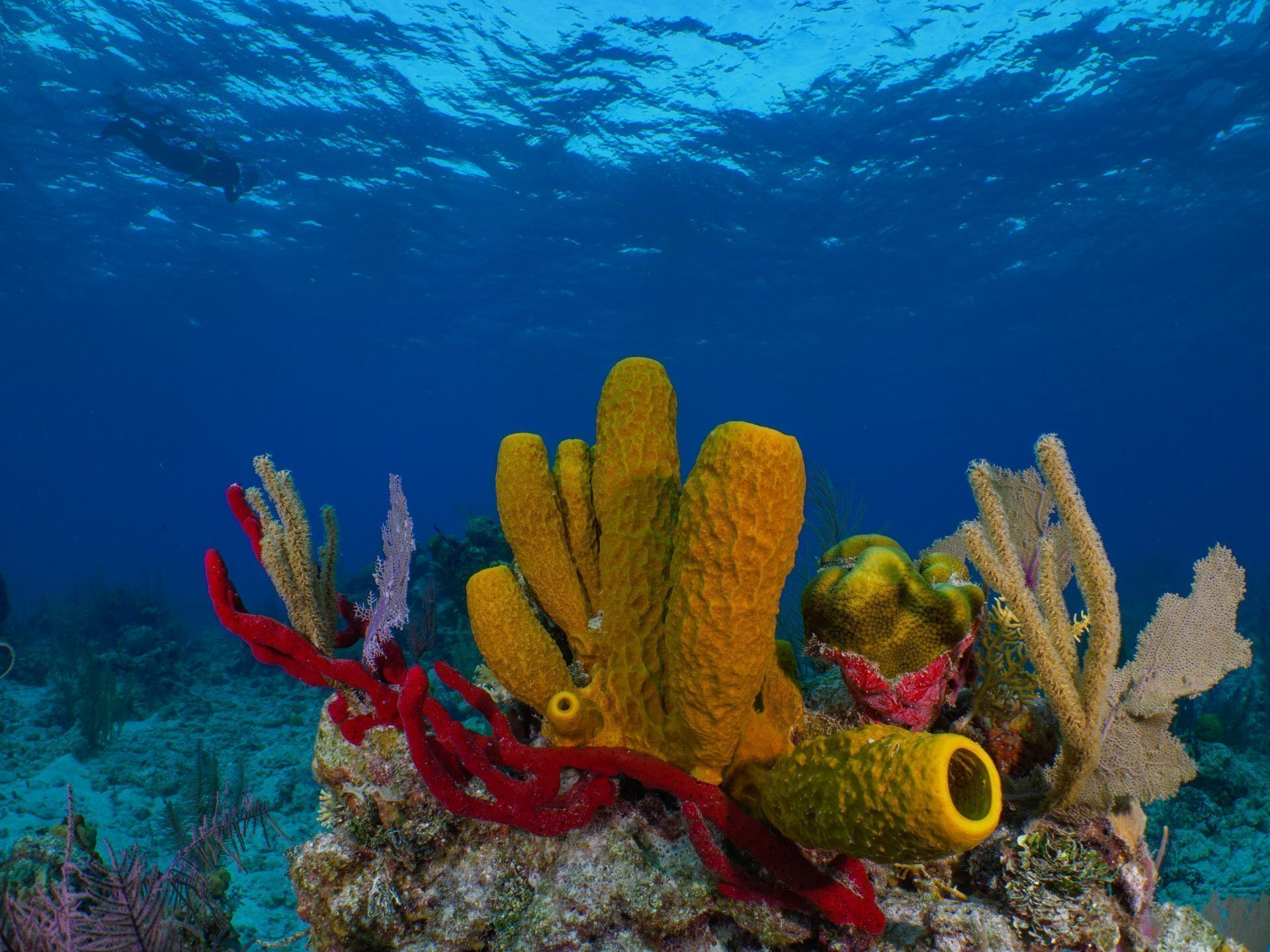Colorful sponges covering the reef