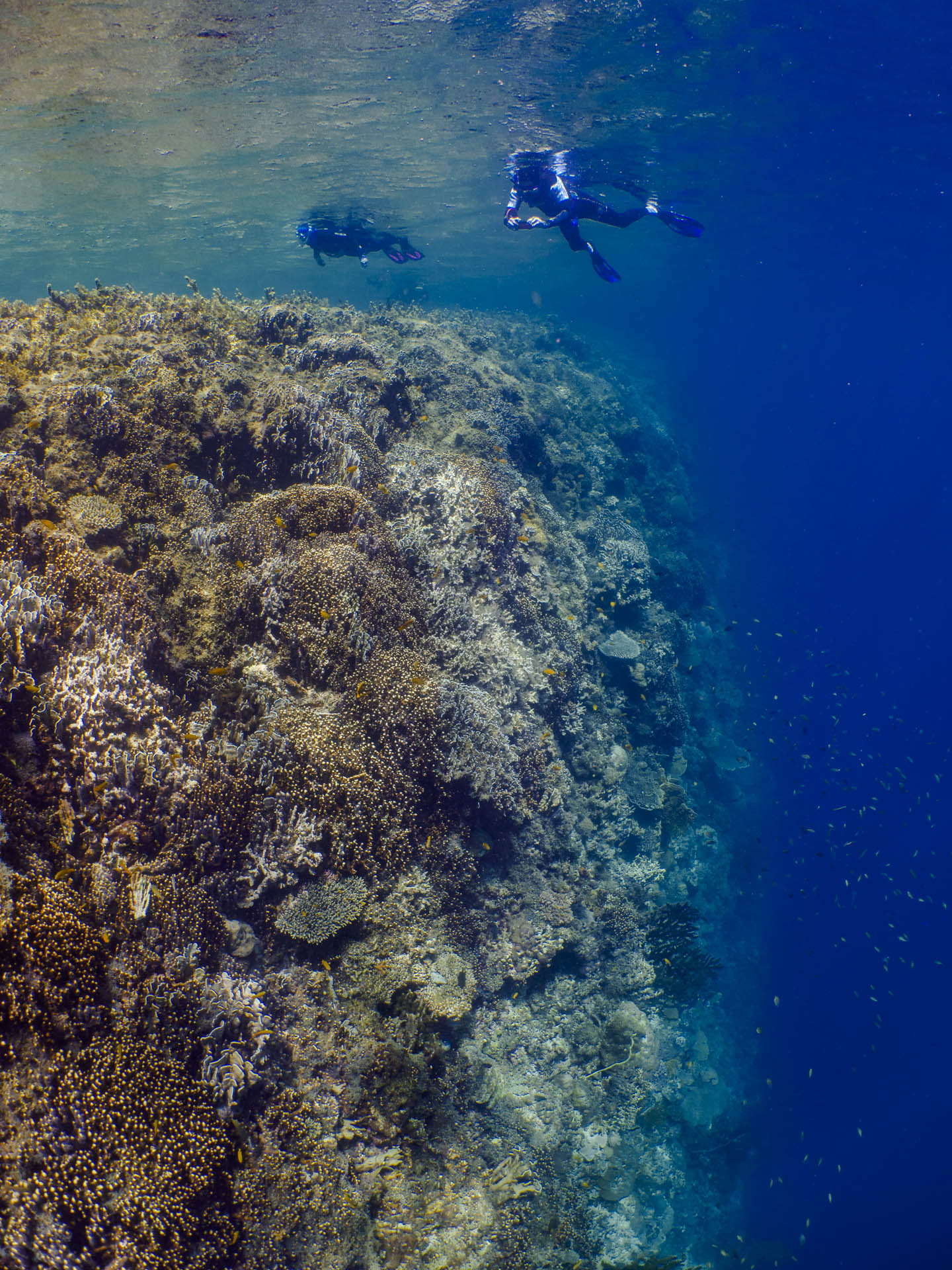 Snorkelers floating above coral wall
