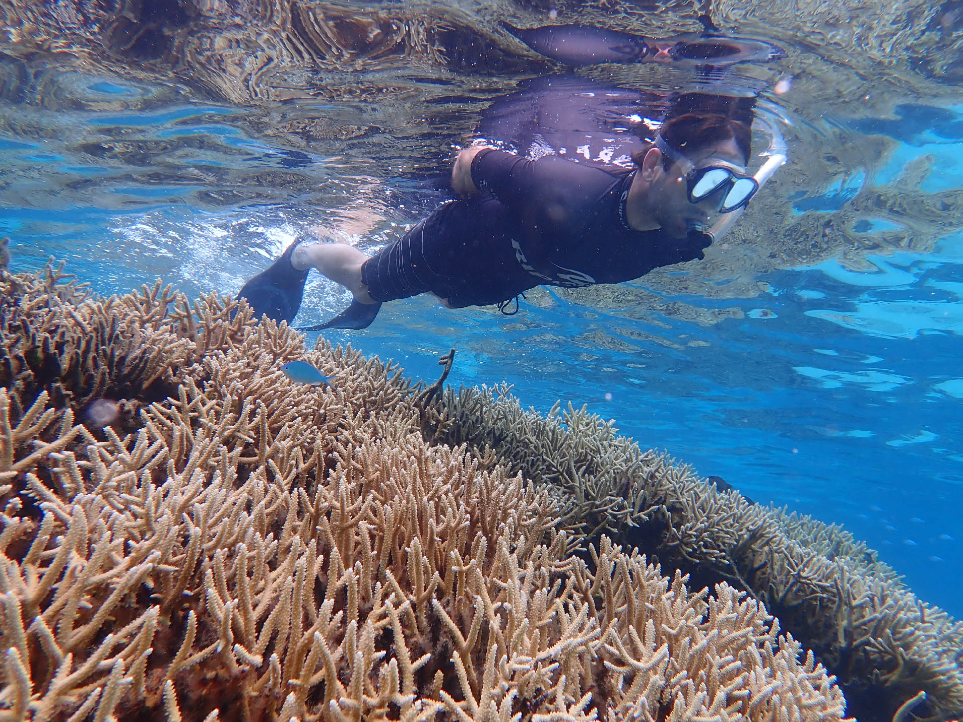 Snorkeler over hard coral reef