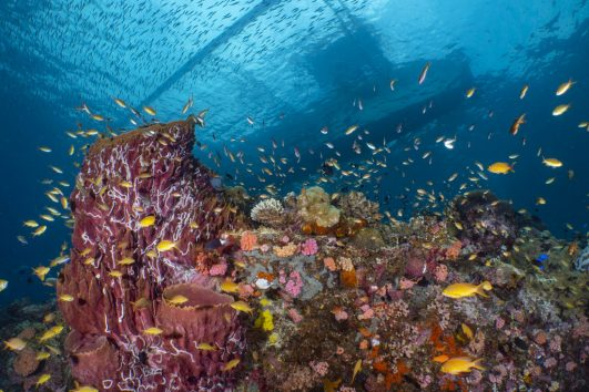 coral reef in the philippines with local boat above