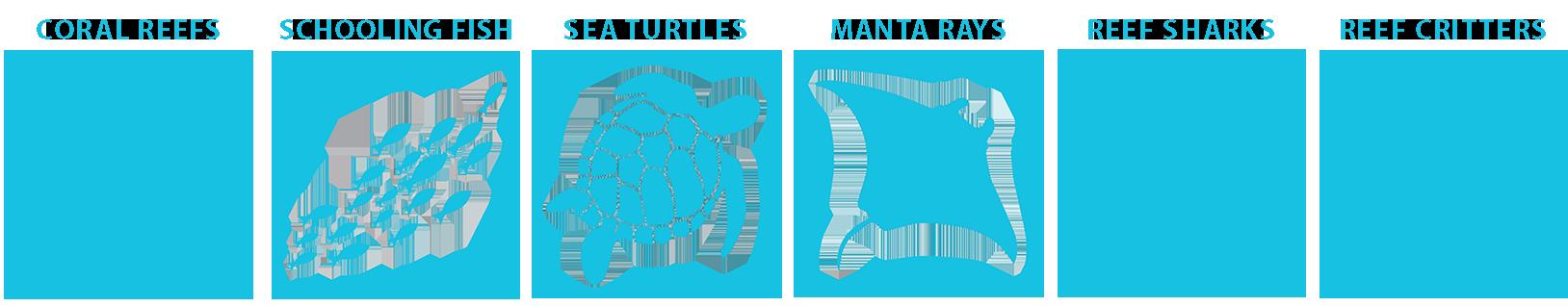 marine life guide Raja ampat