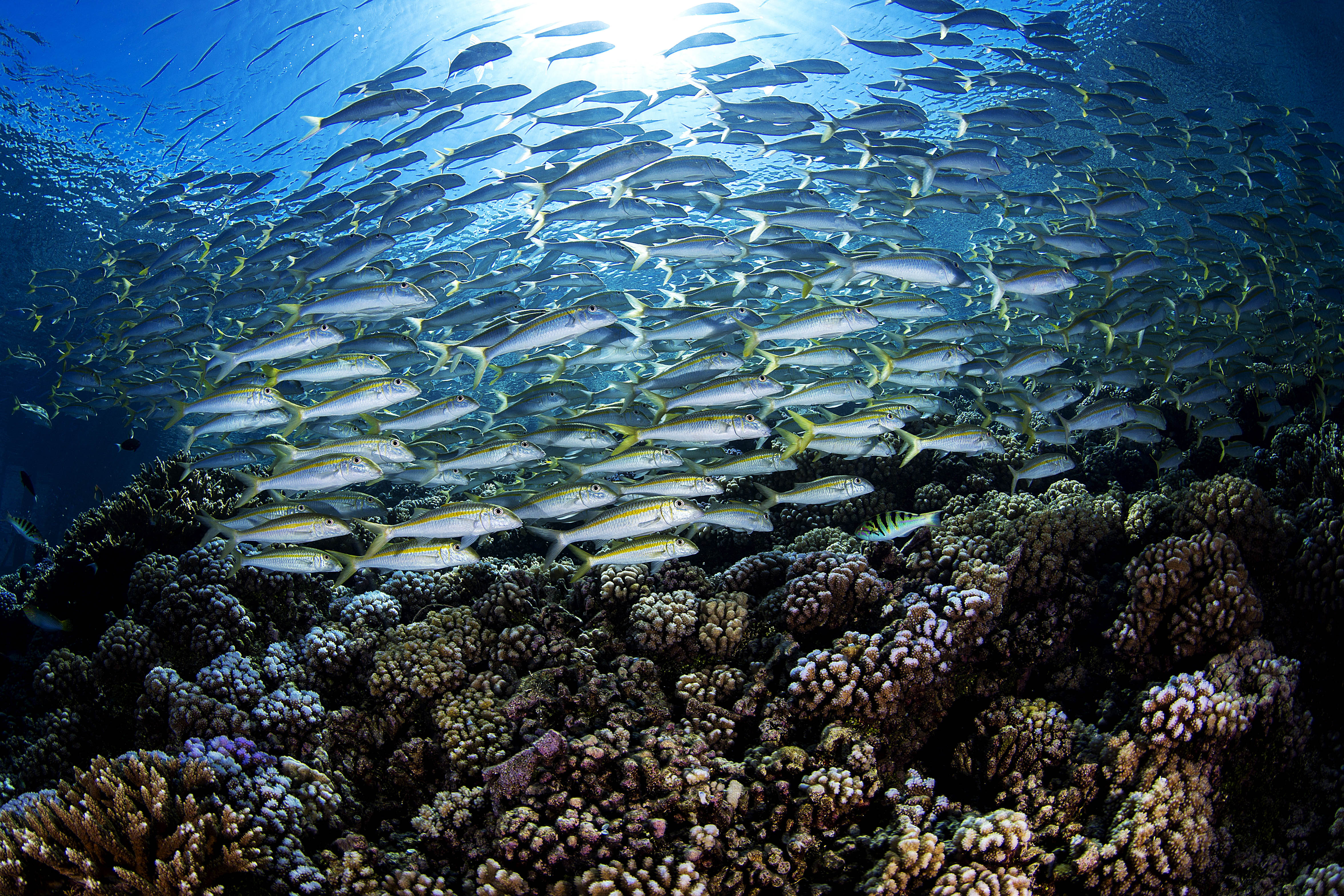 school of fish over hard coral reef