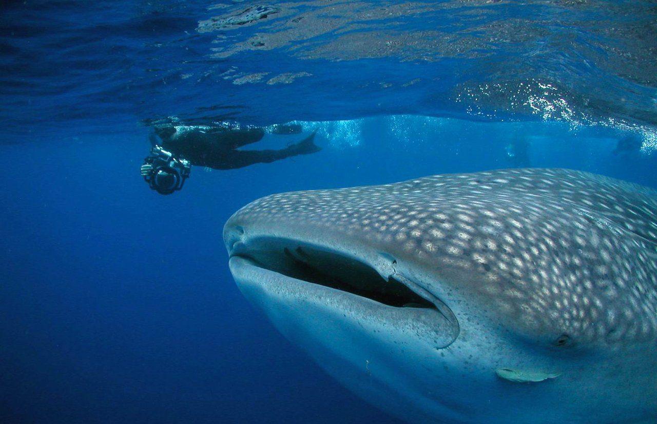 Roatan snorkeling