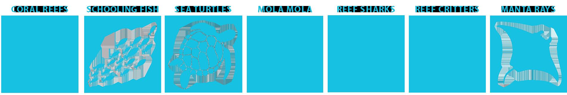 marine life guide Alor and Komodo