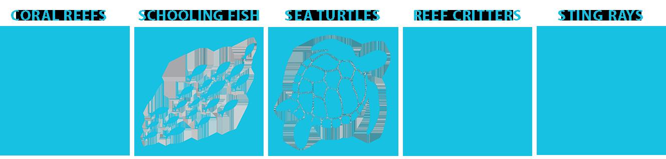 marine life guide wakatobi