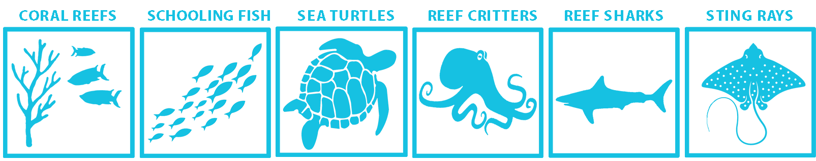 marine life guide Caribbean