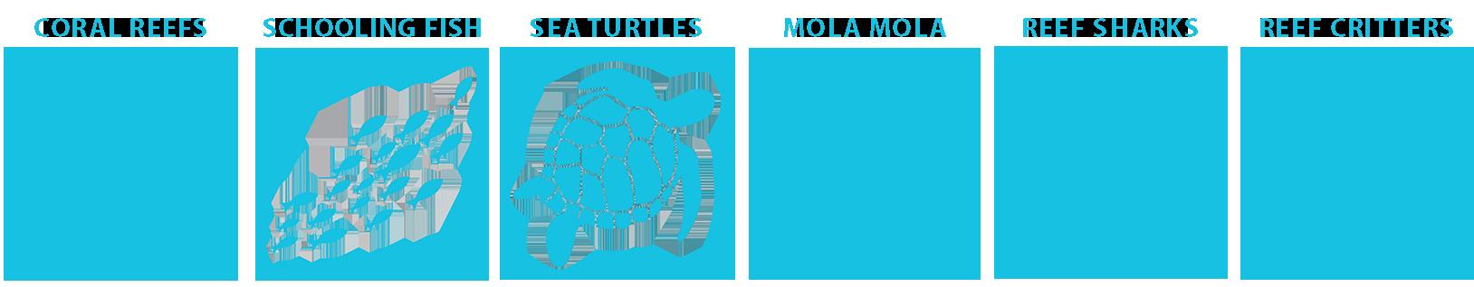 marine life guide alor