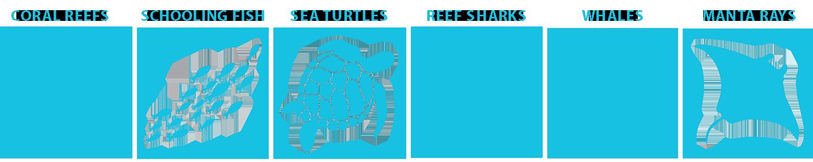 marine life guide Tonga