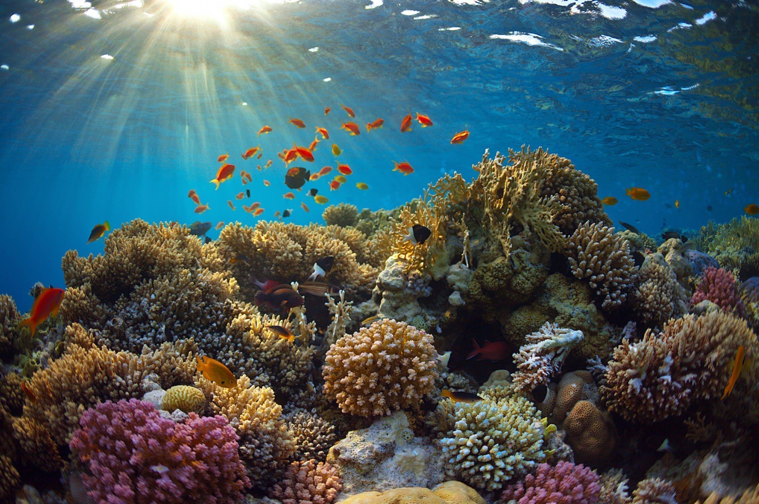 Hard coral reef with sunbeams