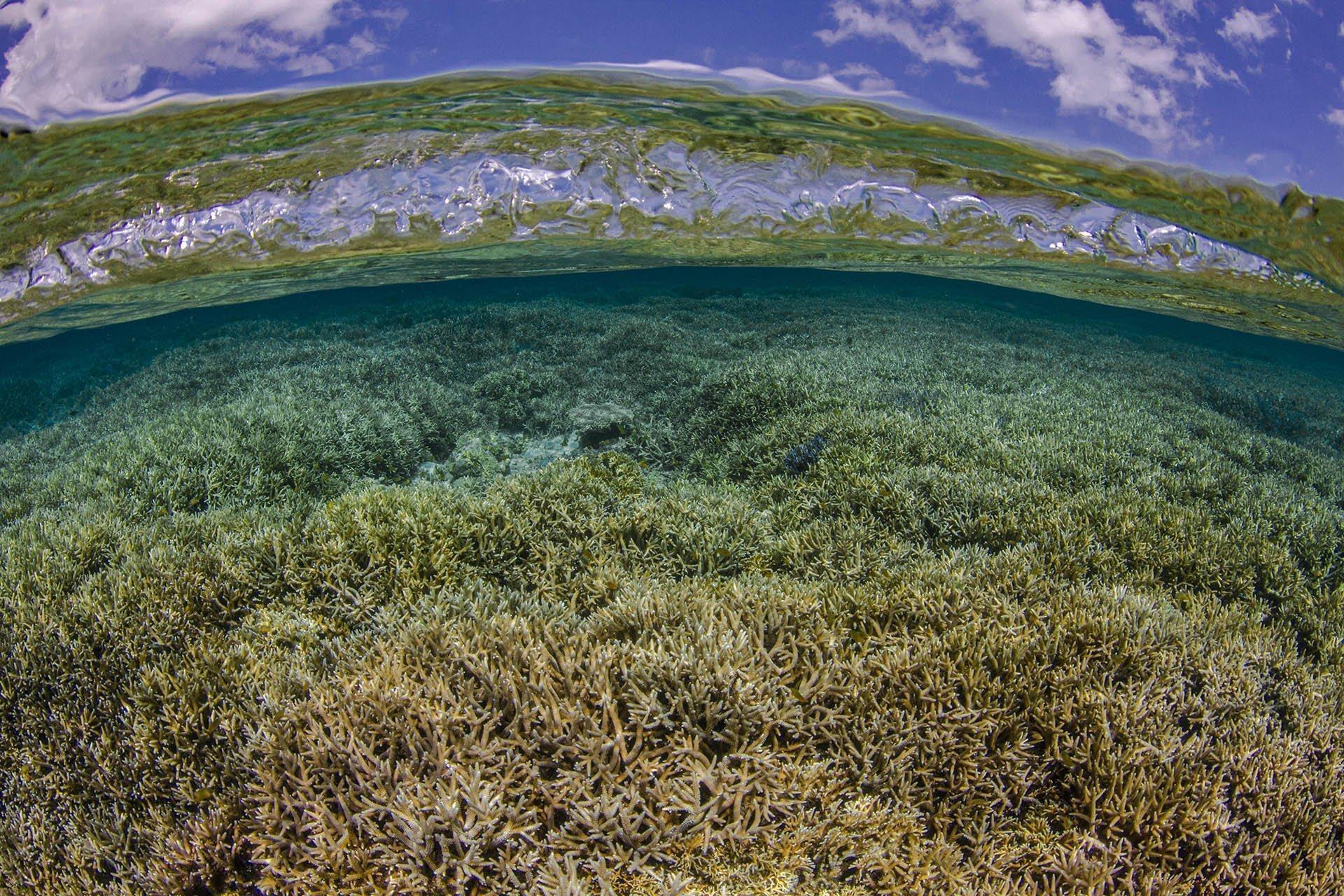 coral reef below blue sky