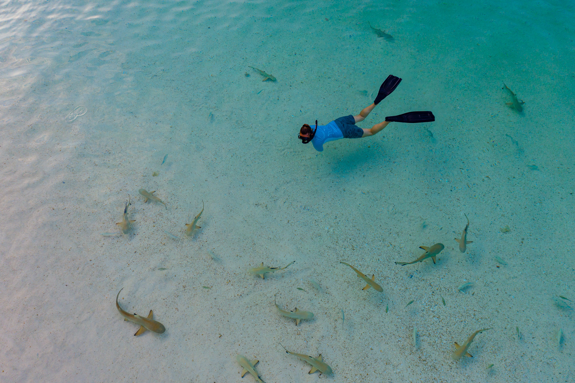 snorkeler surrounded by baby sharks