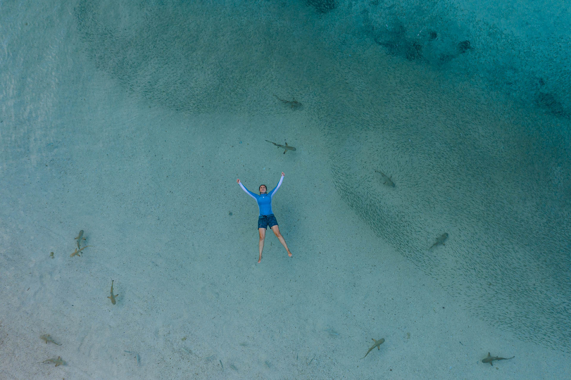 girl floating in the water above a school of juvenile blacktip reef sharks