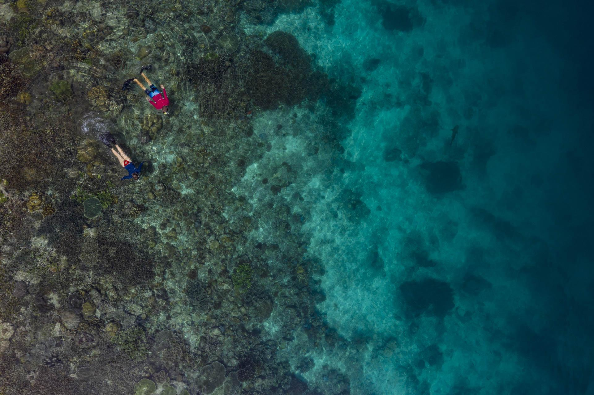 snorkelers over coral reef
