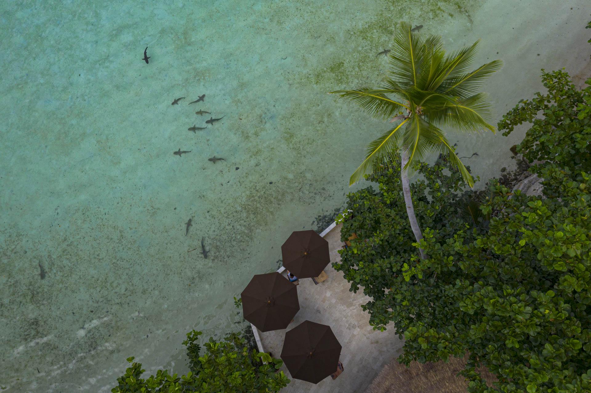 Dozens of sharks swimming in front of Misool Resort's restaurant