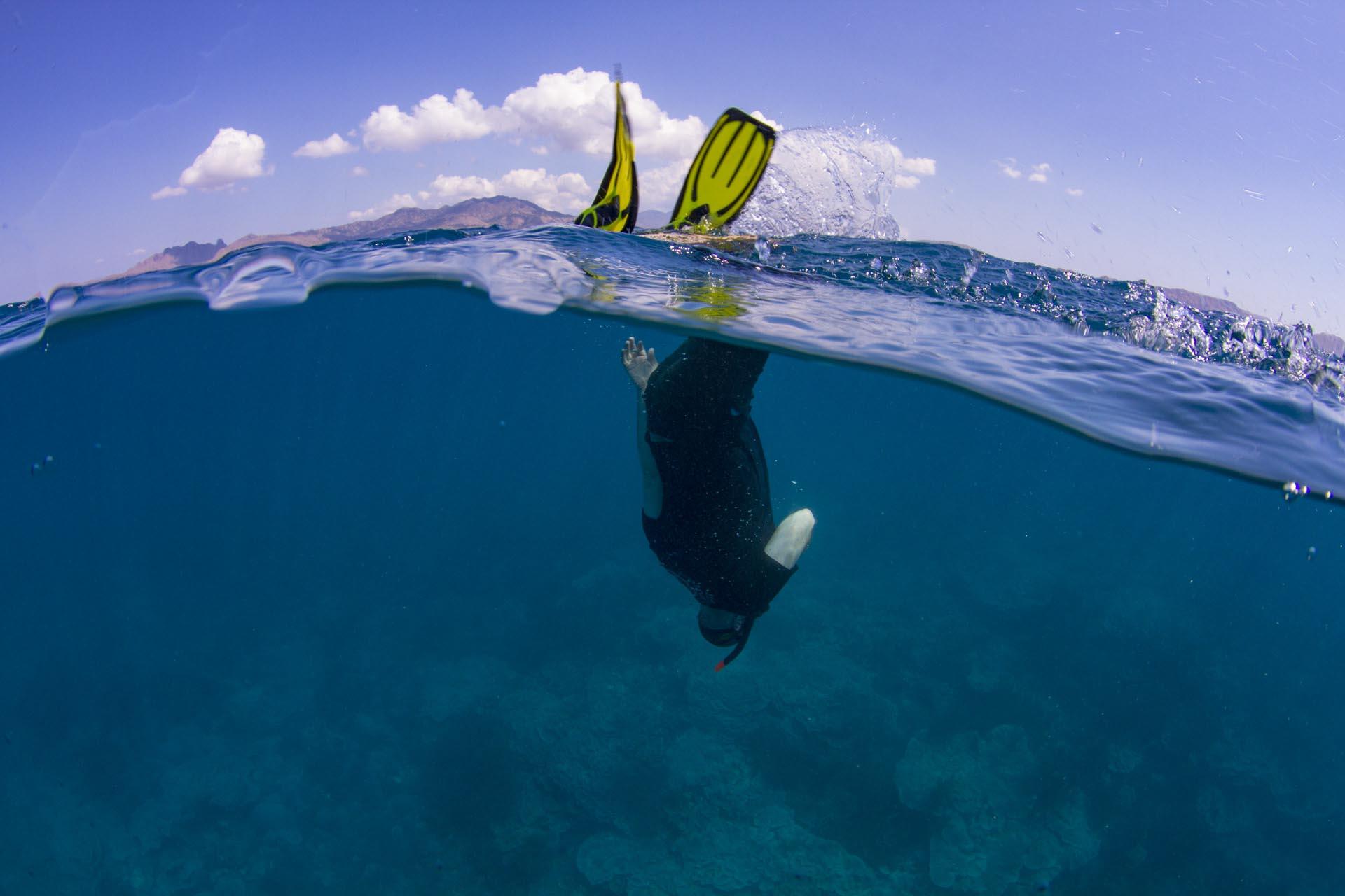 Snorkeler duck diving