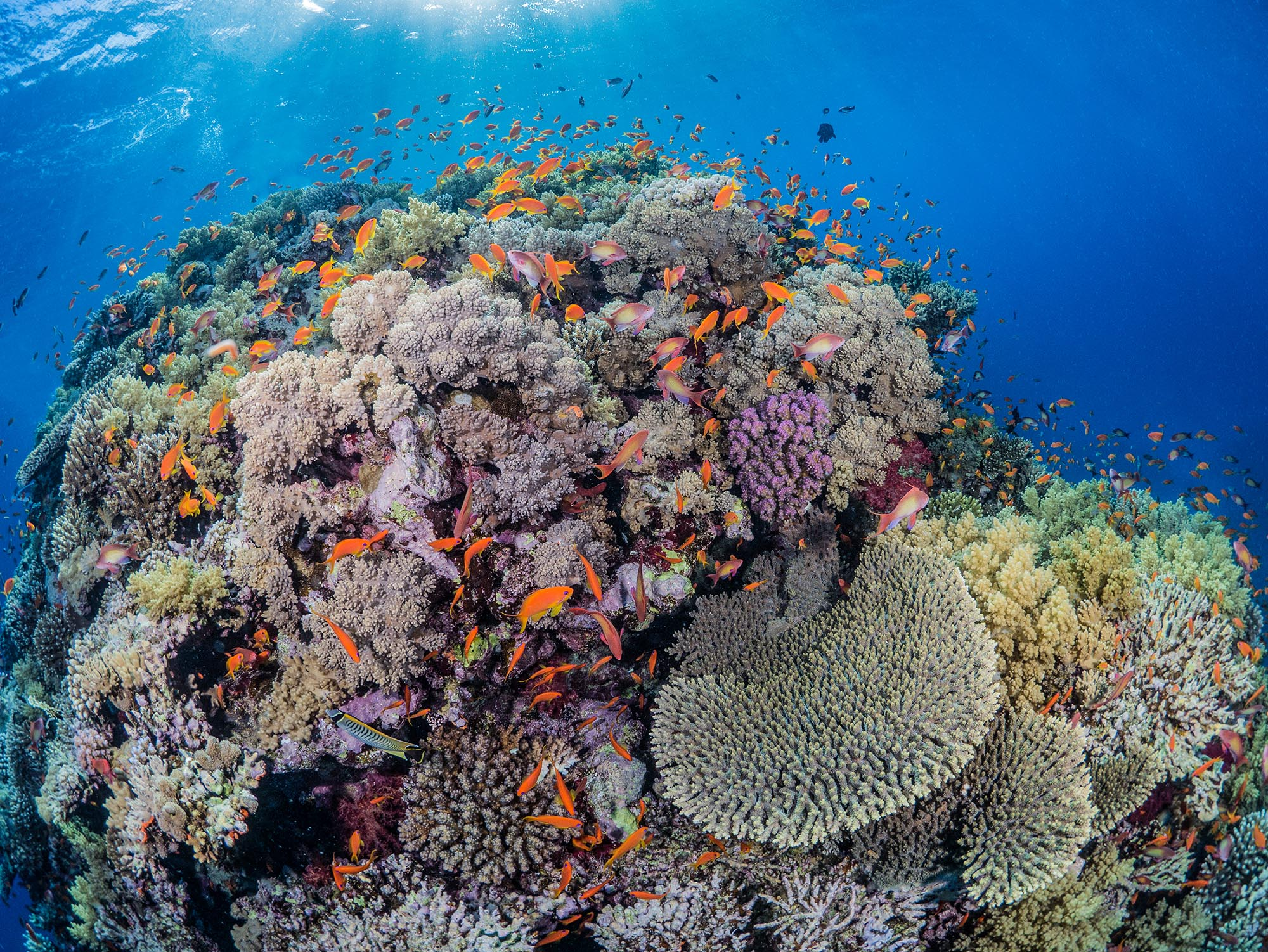Hard coral reef scene in red sea