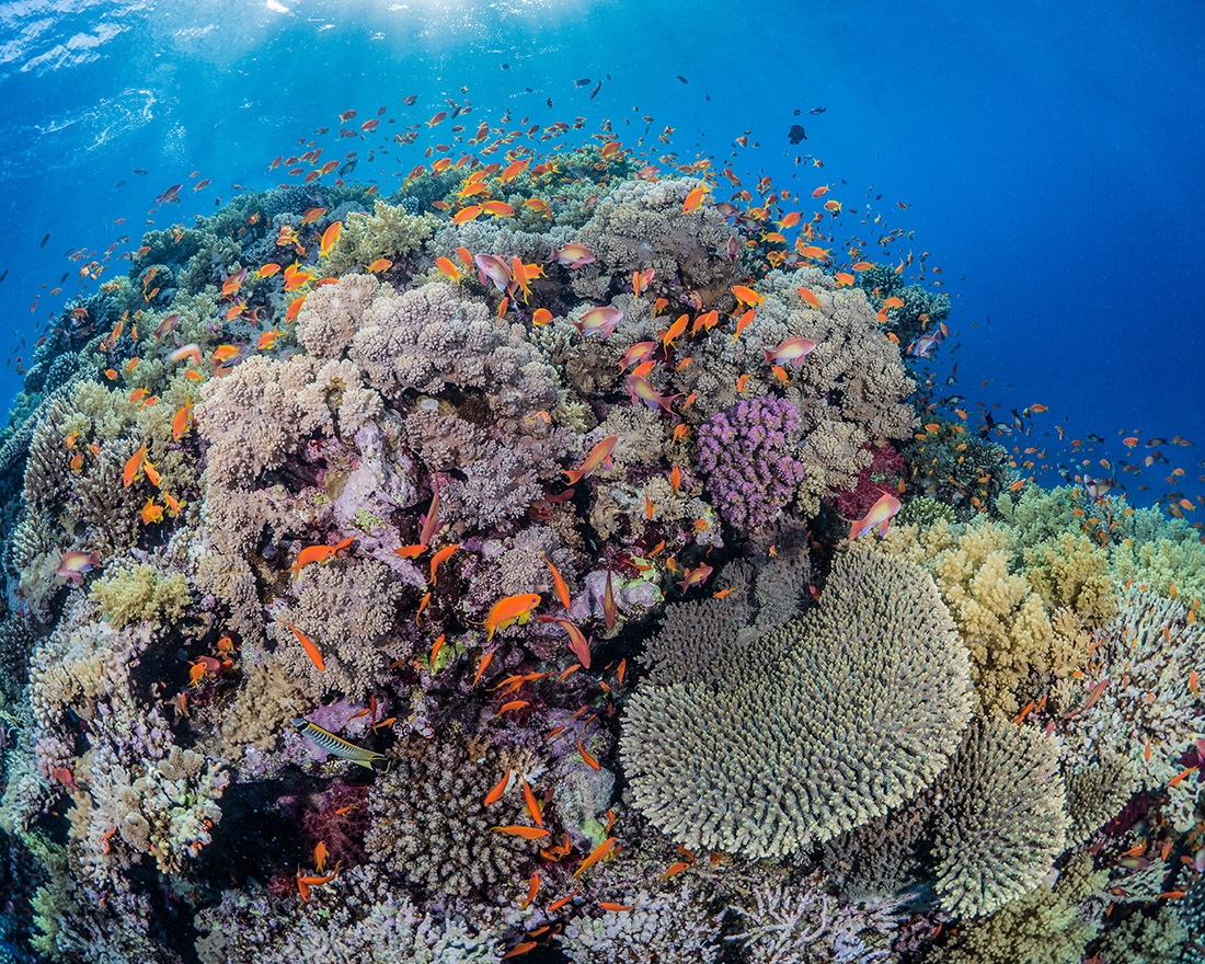 coral reef in French polynesia